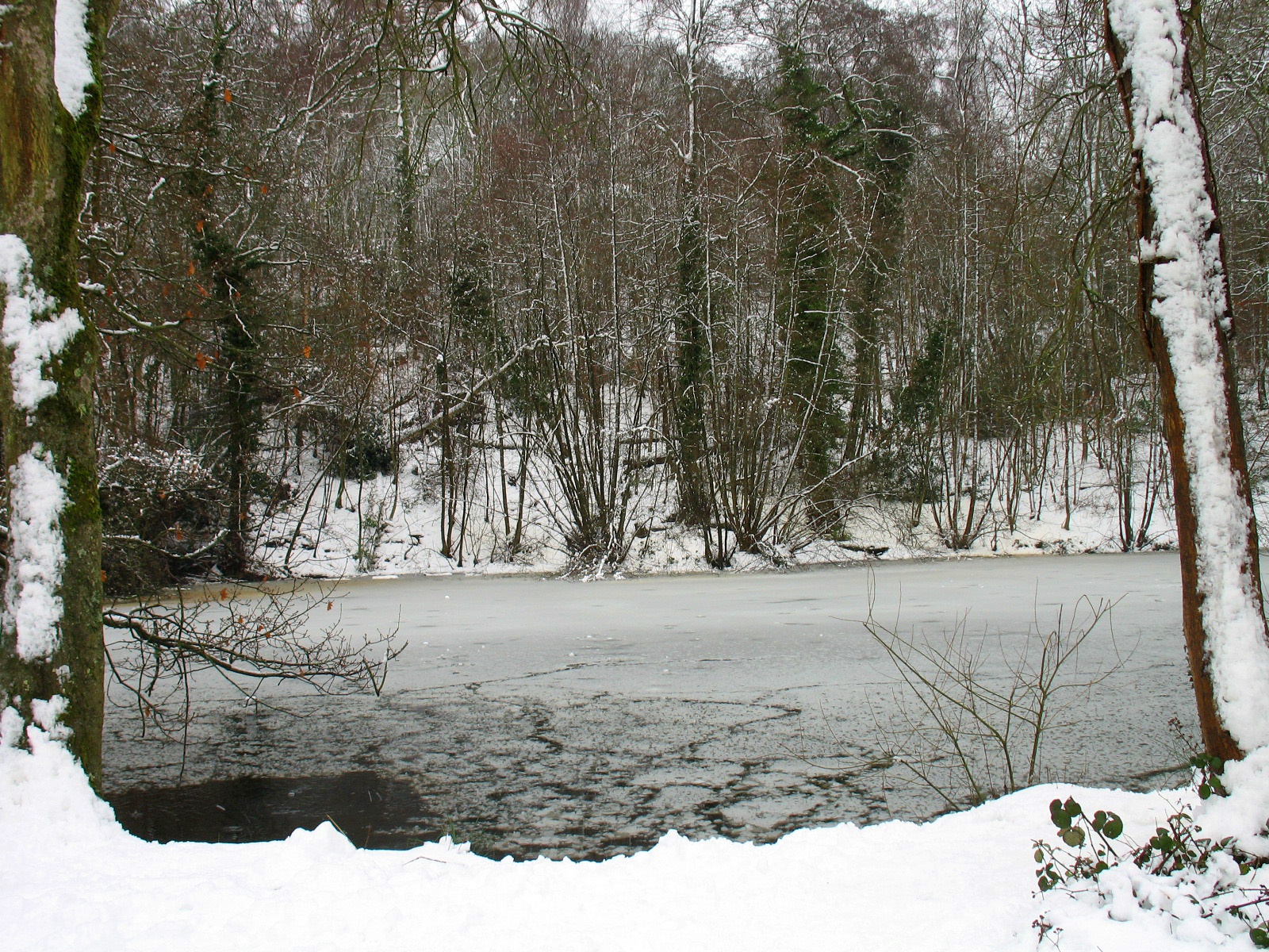 Winter at the Pond of the C.S. Lewis Nature Reserve